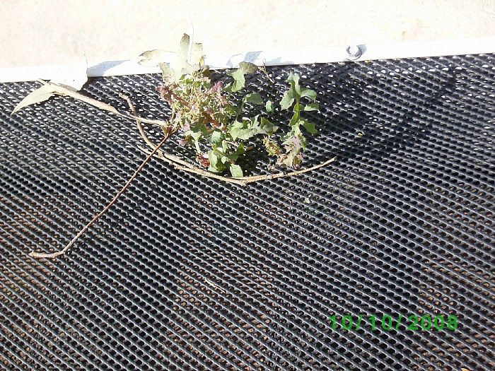 Plants growing through fixed gutter mesh